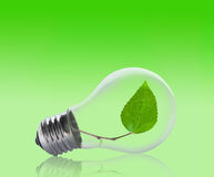 Light bulb with a leaf inside. Light bulb with a leaf growing inside. Environment, eco technology and energy concept Royalty Free Stock Photography