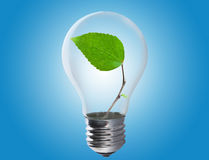 Light bulb with leaf inside. Light bulb with a leaf growing inside. Environment, eco technology and energy concept Royalty Free Stock Photography