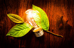 Light bulb on leafs. Bright light bulb on green leafs at a wooden table Stock Photo