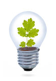 Light bulb with leaves inside. Stock Photography