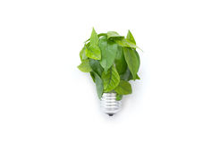 Light bulb made of green leaves Royalty Free Stock Photos