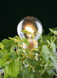 Light bulb with mint Royalty Free Stock Photo