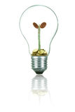 Light Bulb. With Money Tree stock photo