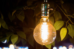 Light bulb at night. Leaves Royalty Free Stock Image