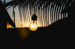 Light bulb and palm tree Stock Image