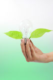 Light bulb with plant Stock Photography