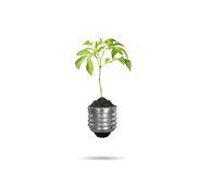 Light bulb with plant as the filament Stock Photo