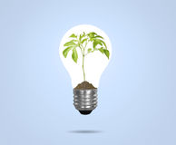 Light bulb with plant as the filament Royalty Free Stock Image
