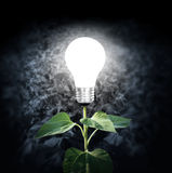 Light bulb with plant as the filament Stock Images