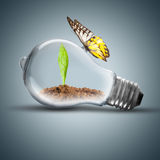 Light Bulb with plant and butterfly. Light Bulb with soil and green plant sprout inside and butterfly on top Stock Photography