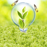 Light Bulb with plant and butterfly Royalty Free Stock Image