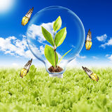 Light Bulb with plant and butterfly Stock Image