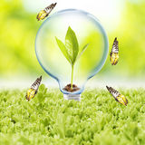 Light Bulb with plant and butterfly Royalty Free Stock Photo