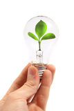 Light bulb with plant inside. Isolated on white Stock Images