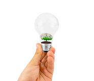 Light bulb with plant inside Royalty Free Stock Image