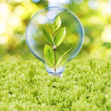 Light Bulb with plant inside Royalty Free Stock Photos