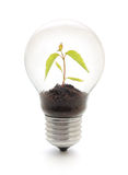 Light bulb with plant Royalty Free Stock Image
