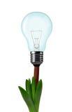 Light bulb on plant Stock Photo