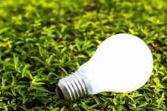 Light bulb on plant Stock Photography
