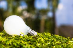Light bulb on plant Stock Photos