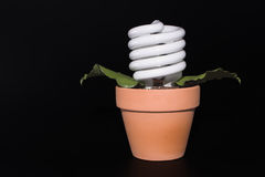 Light Bulb Potted Plant Royalty Free Stock Images