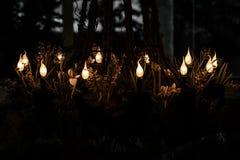Light bulb seems Soul. Stock Image