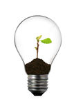 Light bulb with small bud inside Stock Image