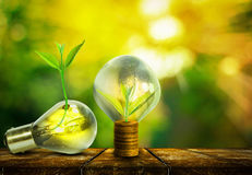 Light bulb with small plant growing inside. With abstract blurred fresh green nature and bokeh background, Eco technology concepts Stock Photo