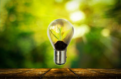Light bulb with small plant growing inside Royalty Free Stock Photo