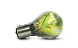 Light bulb with small plant growing inside. Eco technology concepts Royalty Free Stock Photography