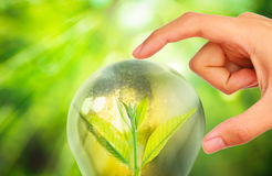 Light bulb with small plant growing inside Royalty Free Stock Photography