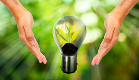Light bulb with small plant growing inside. With human hand Stock Photography