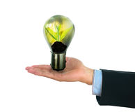 Light bulb with small plant growing inside. With human hand Stock Photos