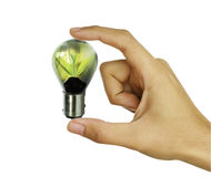 Light bulb with small plant growing inside with human hand Stock Photography