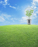 Light Bulb with small plant inside and green grass field over bl Stock Photos