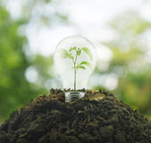 Light Bulb with small plant inside on pile of soil over green en Stock Photo