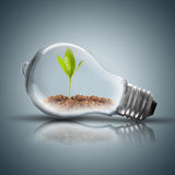 Light Bulb with soil and green plant sprout inside and butterfly Royalty Free Stock Photos
