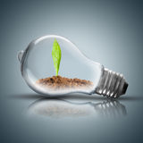 Light Bulb with soil and green plant sprout inside. Growing. On Blue Background Royalty Free Stock Photography