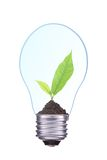 Light Bulb with soil and young green plant Stock Image