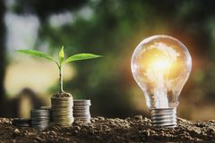 Light bulb on soil with young plant growing on money. Stack royalty free stock photography