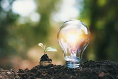 Light bulb on soil with young plant growing on money stack. saving finance and energy. Concept royalty free stock images