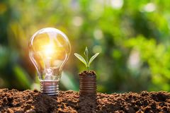 Light bulb on soil with young plant growing ooney stack. saving finance and energy concept. Light bulb on soil with young plant growing on money stack. saving stock image