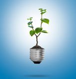 Light Bulb with sprout Royalty Free Stock Photos