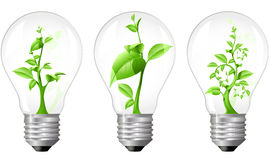 Light Bulb with sprout inside Royalty Free Stock Images