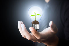 Light Bulb with sprout Stock Photos
