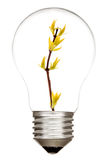 Light Bulb with sprout inside Stock Images