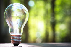 Light bulb. Standing light bulb on the ground with blurred green forest on background Royalty Free Stock Image