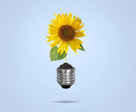Light bulb with sunflower as the filament Royalty Free Stock Photos