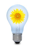 A light bulb with sunflower inside. royalty free stock images