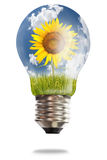 Light bulb with sunflower and paddy rice Royalty Free Stock Image